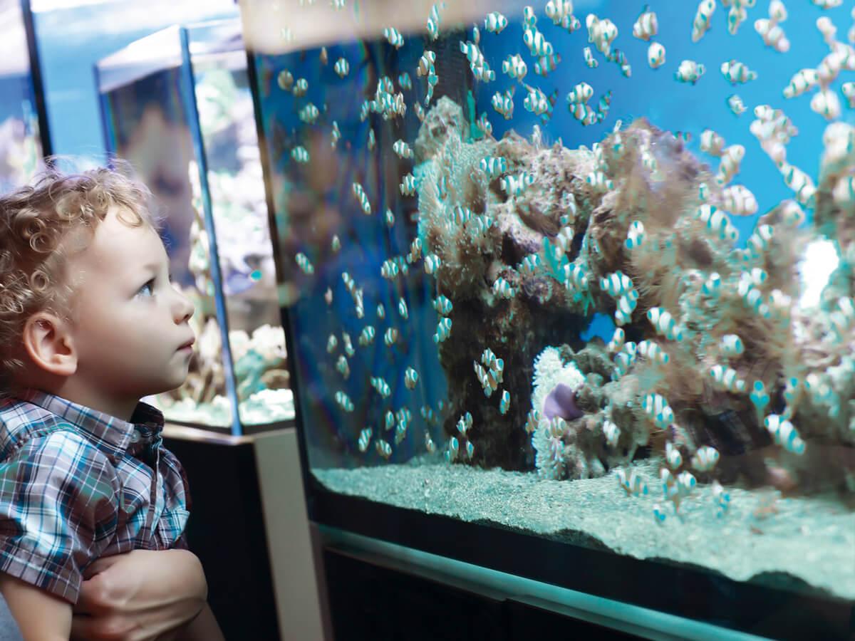Unterwasserwelt in bestem Licht